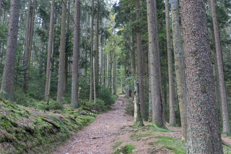 Hiking in the bavarian mountains royalty free stock photo