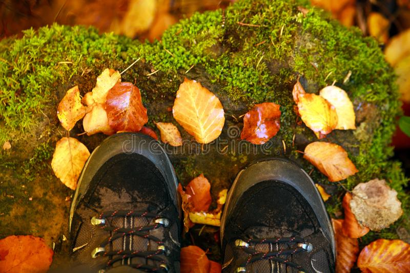 Hiking boots on background of fallen autumn leaves. Hiking boots on the background of fallen autumn leaves royalty free stock images