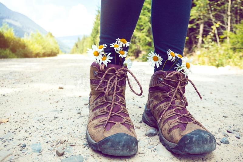A hiking boots. Hiking boots close-up. girl tourist in boots with daisies stock photography