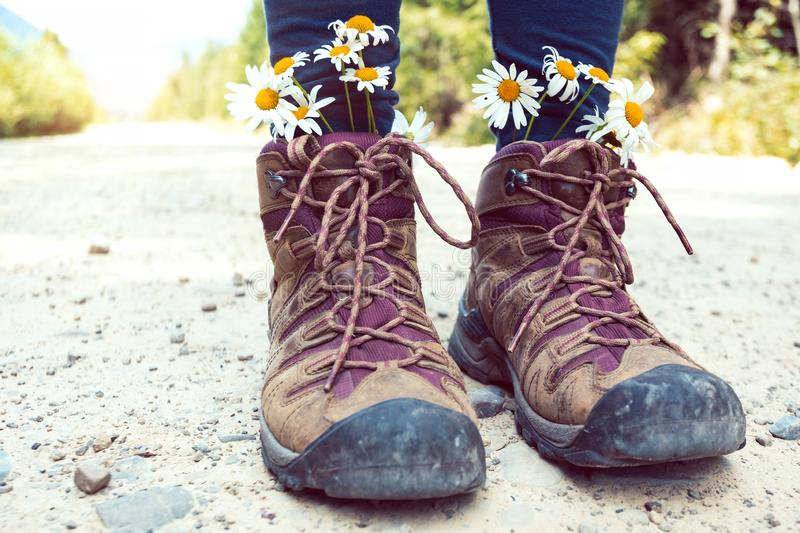 A hiking boots. Hiking boots close-up. girl tourist in boots with daisies royalty free stock images