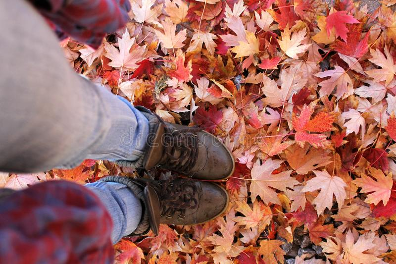 Hiking boots in colorful leaves. Brown hiking boots standing on bright colorful autumn leaves looking down from above royalty free stock photos