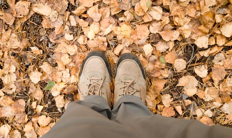 Hiking boots on the feet of a woman and a large number of fallen leaves on the road. Hiking during autumn leaf fall.  royalty free stock photography