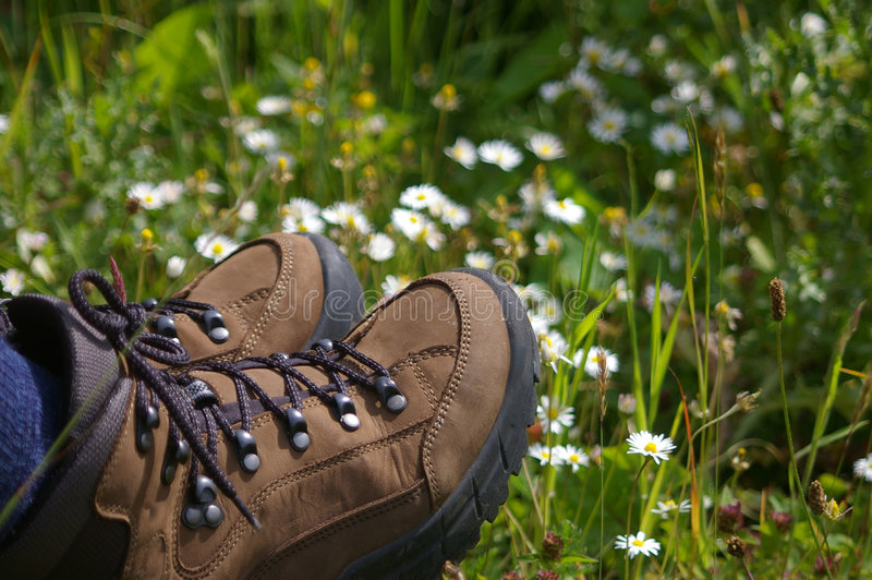 Hiking boots in field of daisys. Hiking boots sitting in a field of daisys stock photo