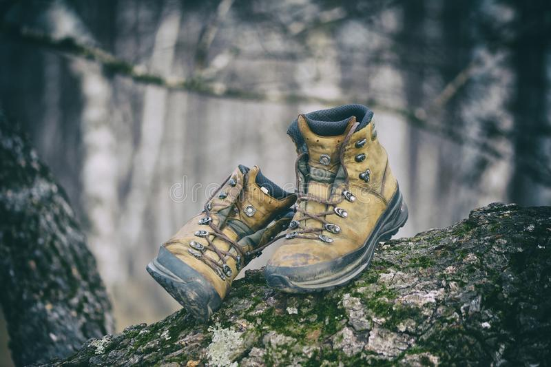 Hiking boots. In the forest stock image