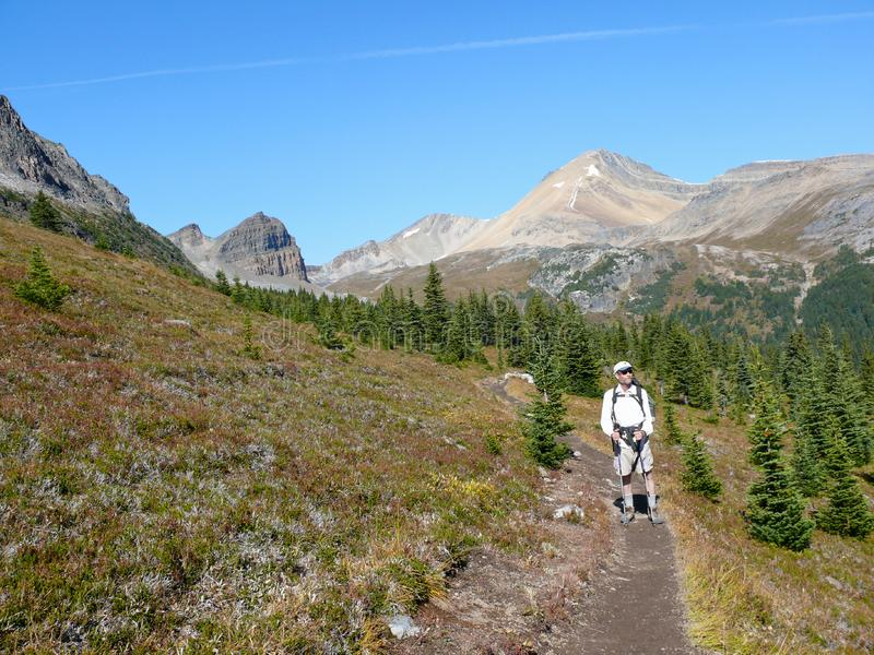 Download Hiking In The Canadian Rockies Stock Photo - Image of hike, trees: 8765438