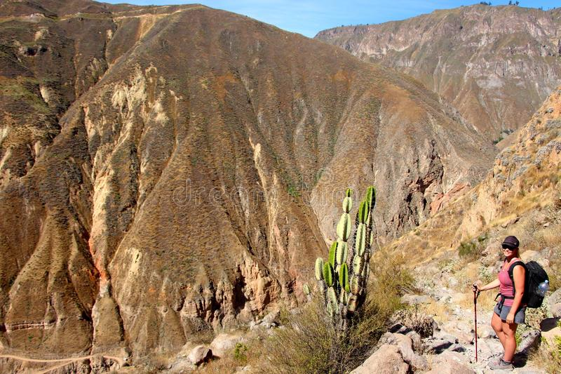 Hiking the Colca Canyon. Colca Canyon is a canyon of the Colca River in southern Peru. Peru`s third most-visited tourist destination with about 160,000 visitors stock photography