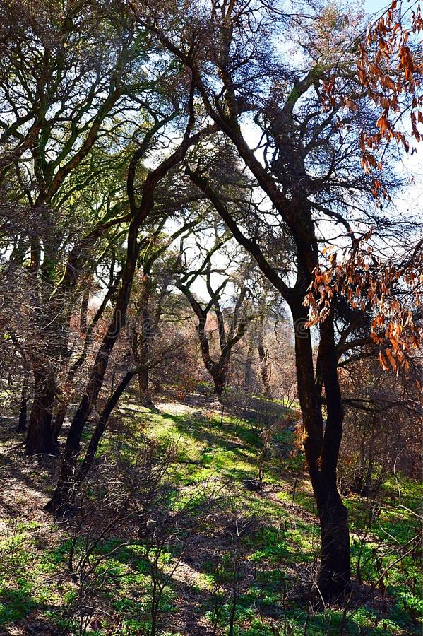 Hiking on the Cuesta Grade royalty free stock photography