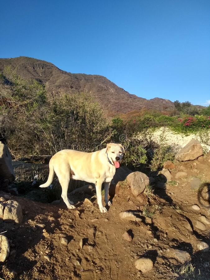 hiking in desert with dog stock image