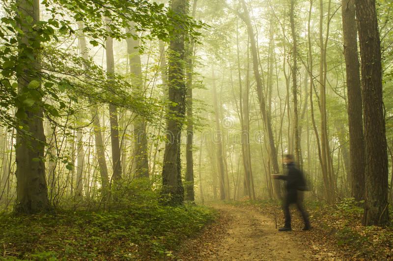 Hiking in forest. Man hiking in forest in the morning mist - travel conceprt