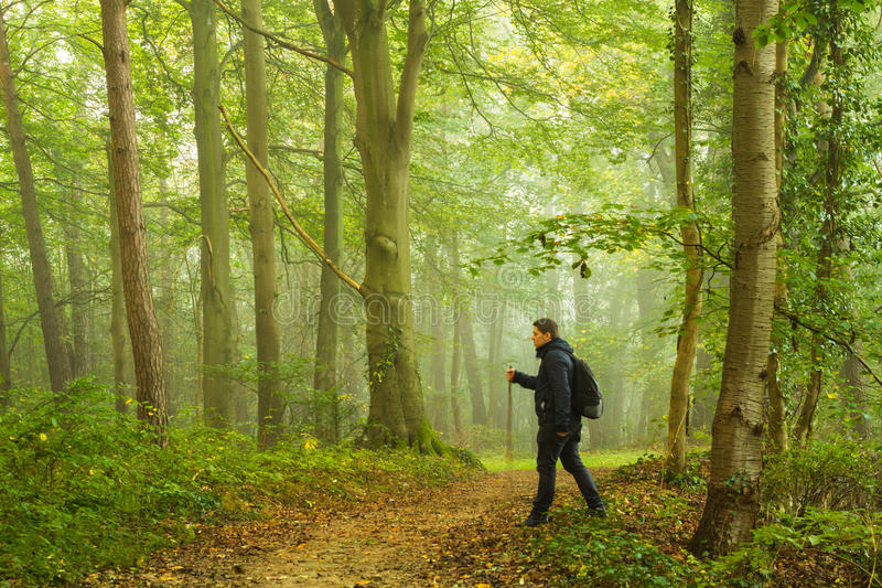 Hiking in forest. Man hiking in forest in the morning mist - travel concept