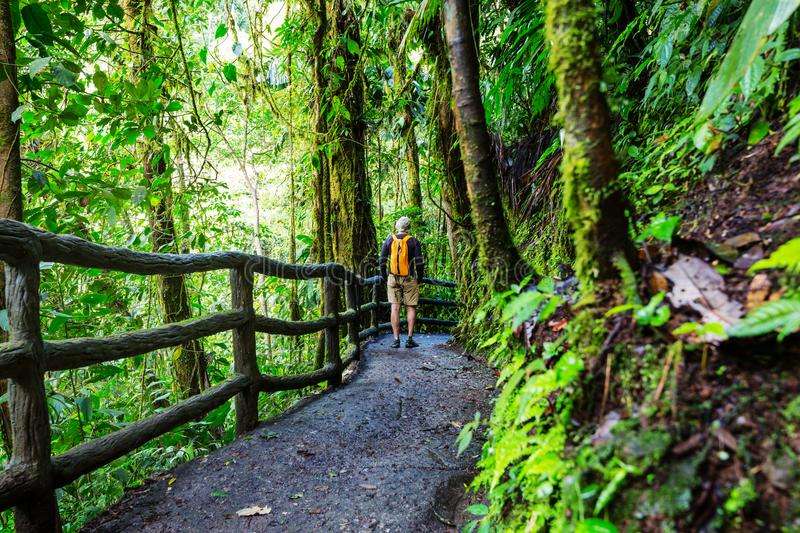 Download Hike in Costa Rica stock photo. Image of alone, national - 109450506