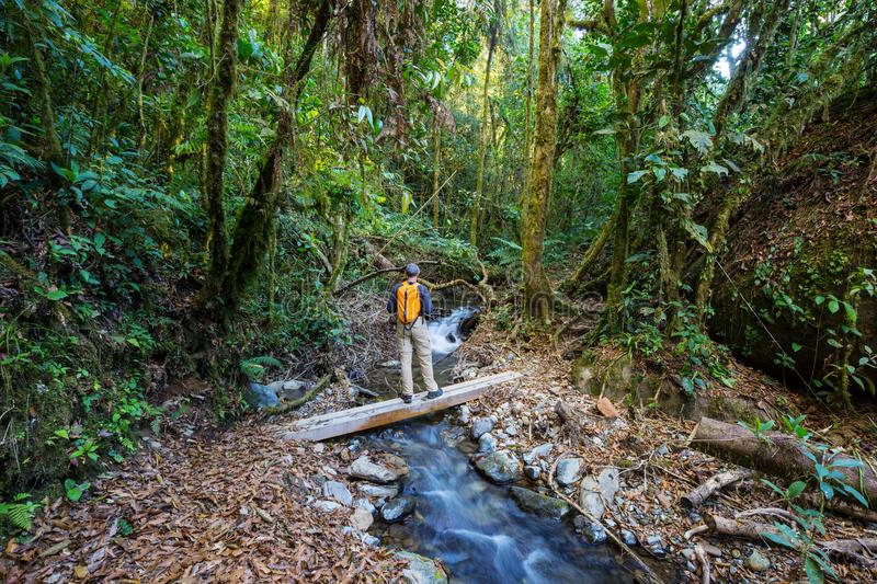 Download Hike in Costa Rica stock image. Image of rica, mountain - 109450565