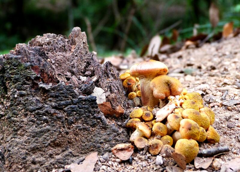 Hiking at Gualba (Montseny) royalty free stock photos