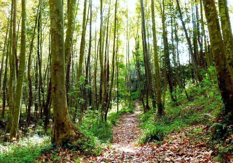 Hiking at Gualba (Montseny) royalty free stock photo