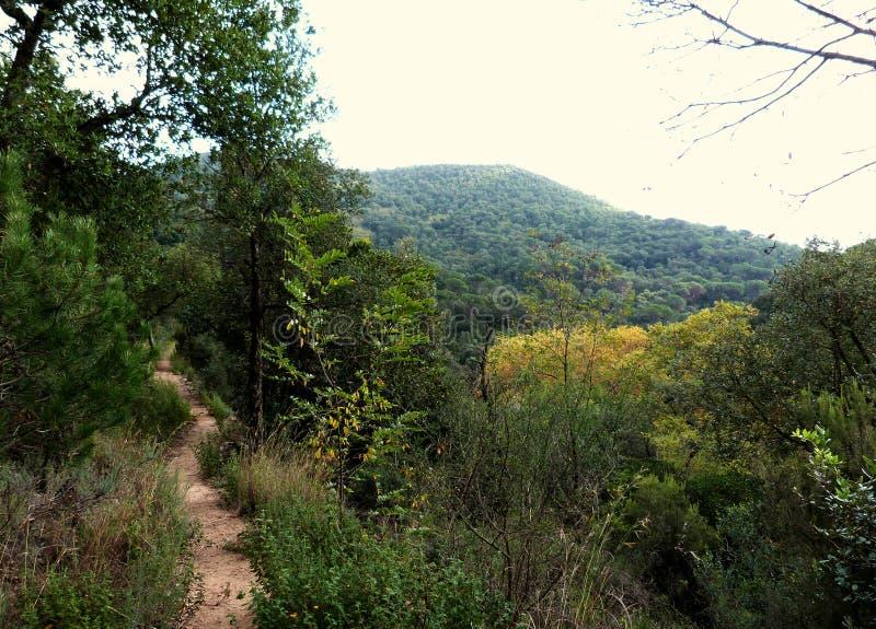 Hiking at Gualba (Montseny) stock images