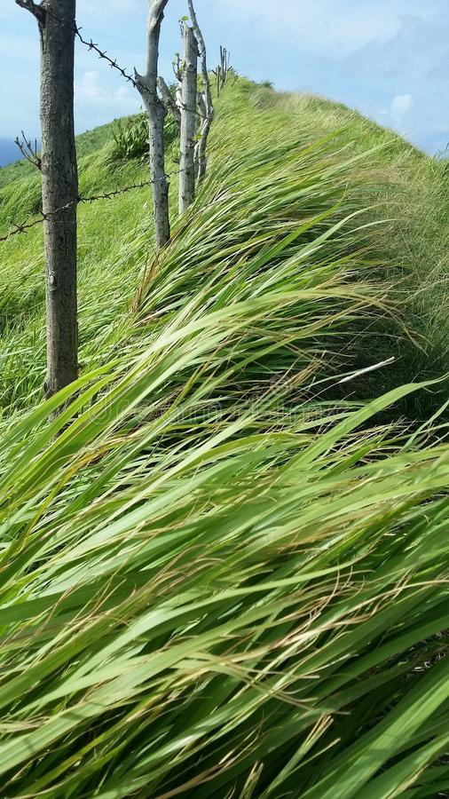 Hiking hill. Grasses trying to defy the wind and fench. Nice stroll over the hills of Batanes royalty free stock images