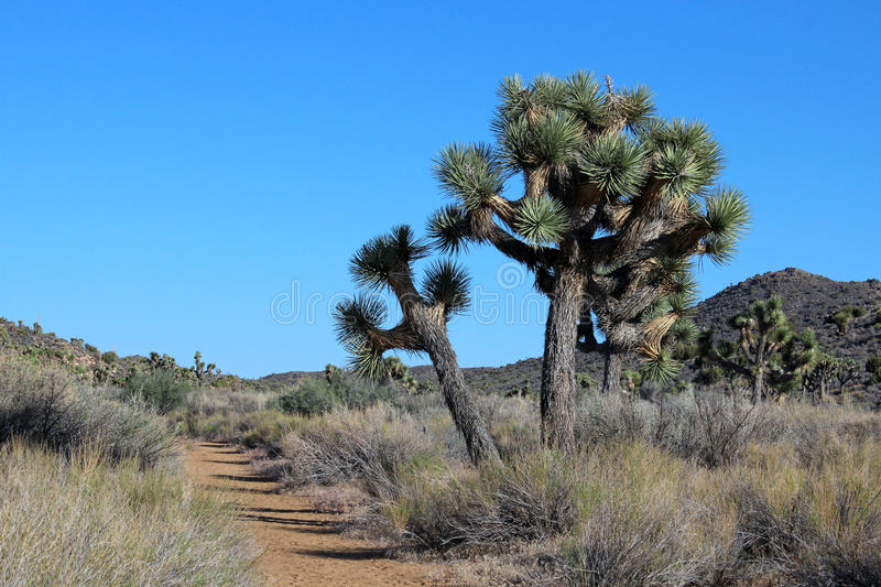 Download Hiking In Joshua Tree National Park Stock Image - Image: 26176073