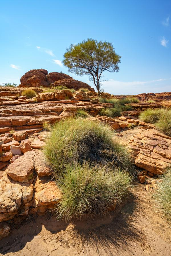 Hiking in kings canyon in the sun, watarrka national park, northern territory, australia 19. Hiking in kings canyon on a sunny day, watarrka national park stock images