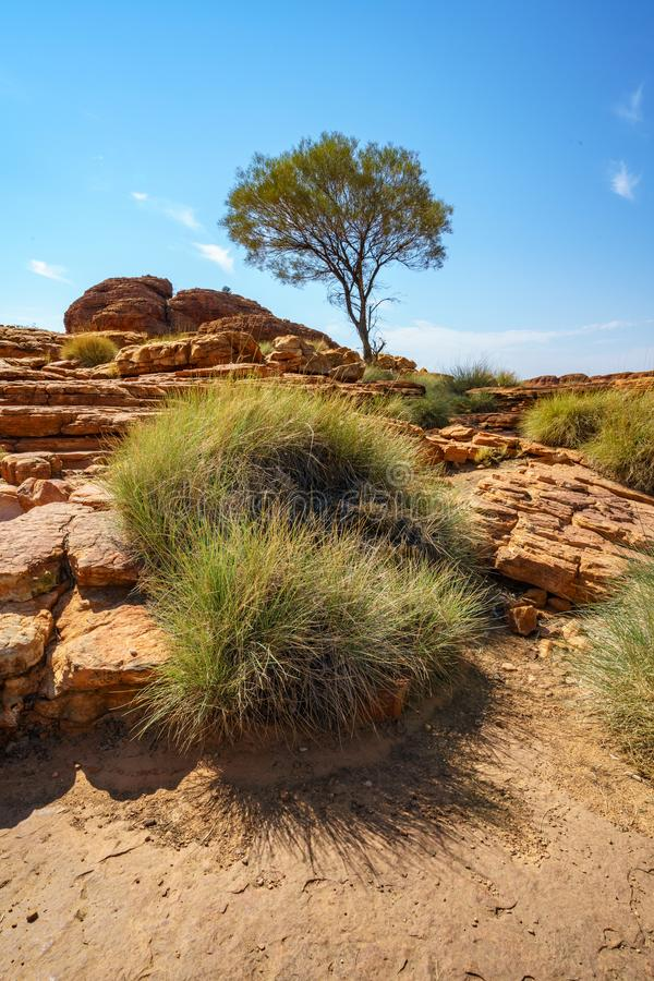 Hiking in kings canyon in the sun, watarrka national park, northern territory, australia 18. Hiking in kings canyon on a sunny day, watarrka national park royalty free stock images