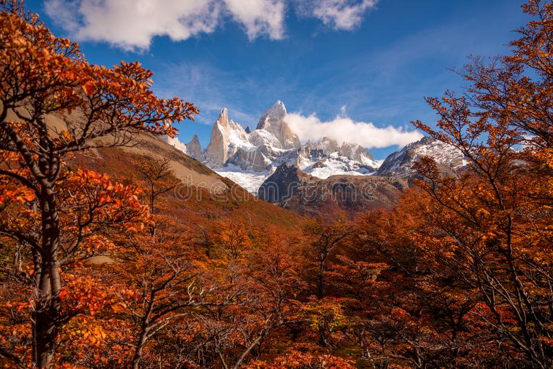 Snow-covered Mount Fitz Roy on beautiful fall day surrounded by lenga trees. Hiking in Los Glaciares National Park on a beautiful fall day, taking in the autumn royalty free stock photography