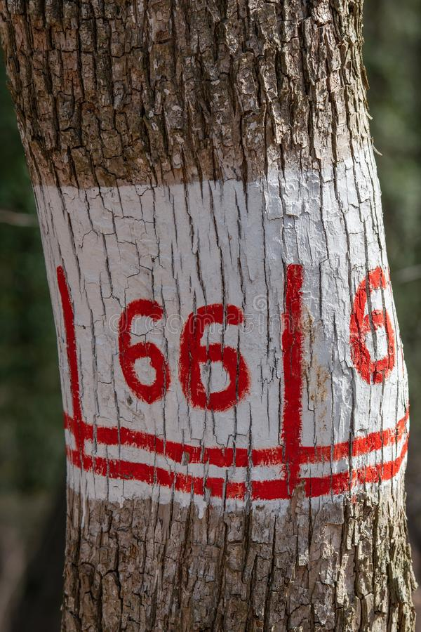 Hiking marking on a tree in the woods stock images
