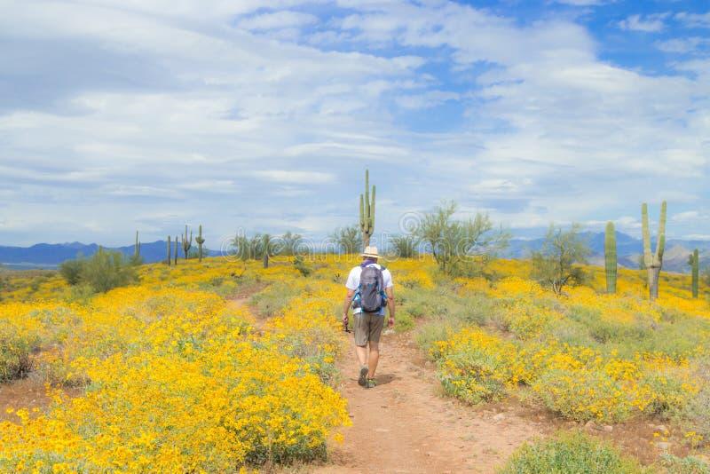 Hiking on the mountain in springtime AZ, USA. Saguaro Cactus with yellow wild flowers on the mountain in the Arizona desert, USA. Hiking in springtime stock photos