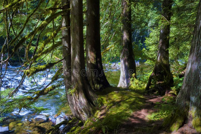 Hiking Mt. Hood National Forest Salmon River stock photo