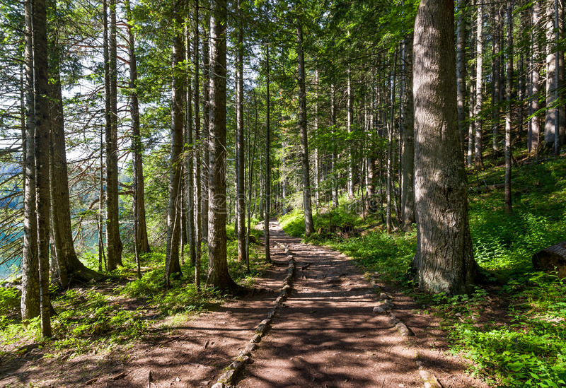 Hiking path in the beautiful forest of Black Lake royalty free stock photography