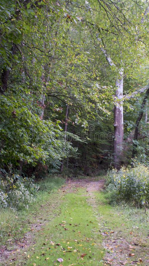 Early morning hiking path royalty free stock images