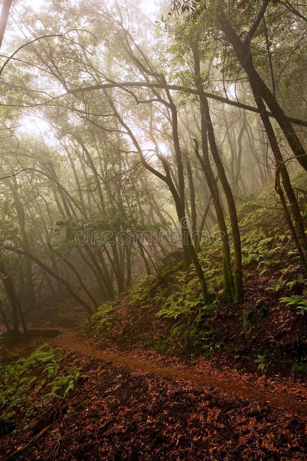 Download Hiking Path Through Foggy Forest Stock Image - Image: 22809307