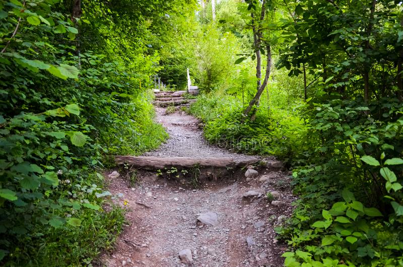 Hiking path in forest leading to the top of famous Harder Kulm, Interlaken, Switzerland. Mountain trail in forest. Hilly terrain. stock image