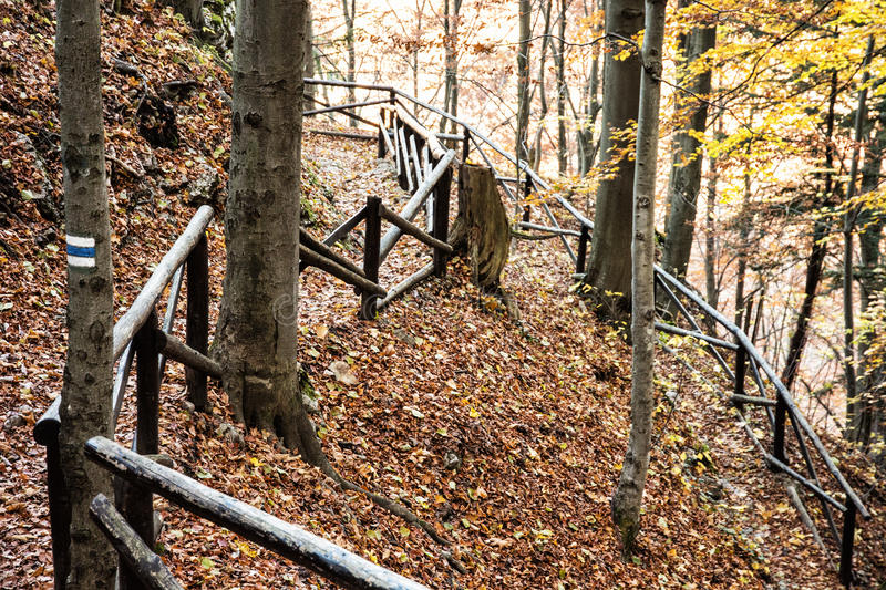 Hiking path with railing in the autumn deciduous forest, tourism stock photography