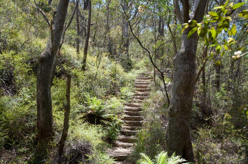 Hiking path with stairs in eucalyptus forest with ferns in under grow royalty free stock image