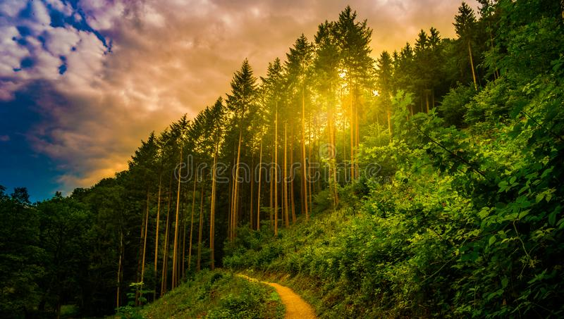Hiking path and sunset in beautiful woods panoramic view, inspirational summer landscape in forest. Beautiful landscape with pathway in the mountains forest at royalty free stock photos