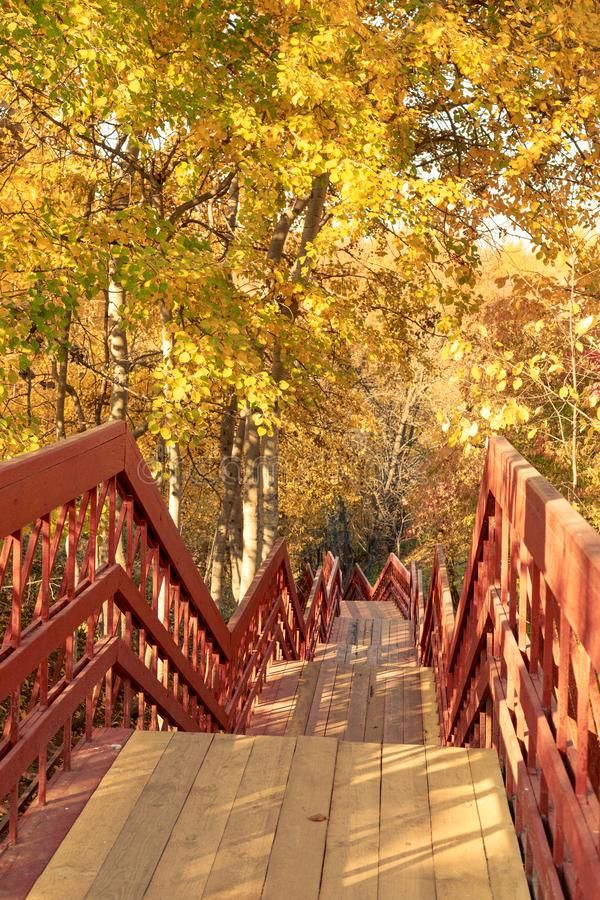 Hiking pathway wth wooden stairs in an autumn forest.  stock image