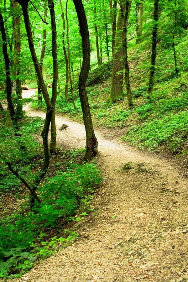Free Hiking Trail Stock Photos - 10164153
