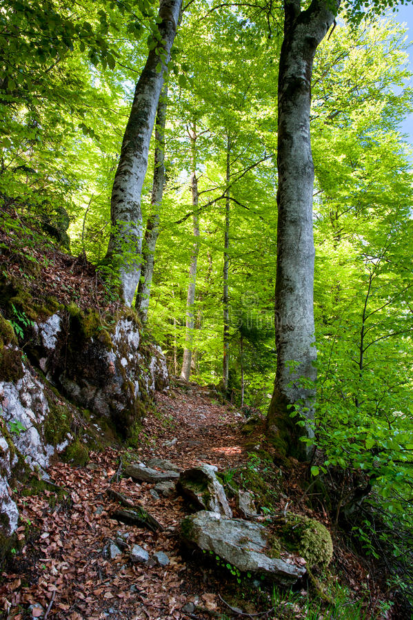 Download Hiking trail stock photo. Image of scenic, fresh, bright - 24820840