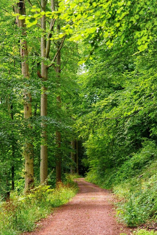 Download Hiking trail stock image. Image of hiking, trip, path - 25905827