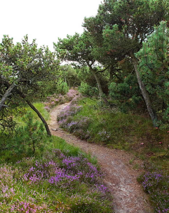 Download Hiking trail stock photo. Image of path, landscape, sommer - 27053056