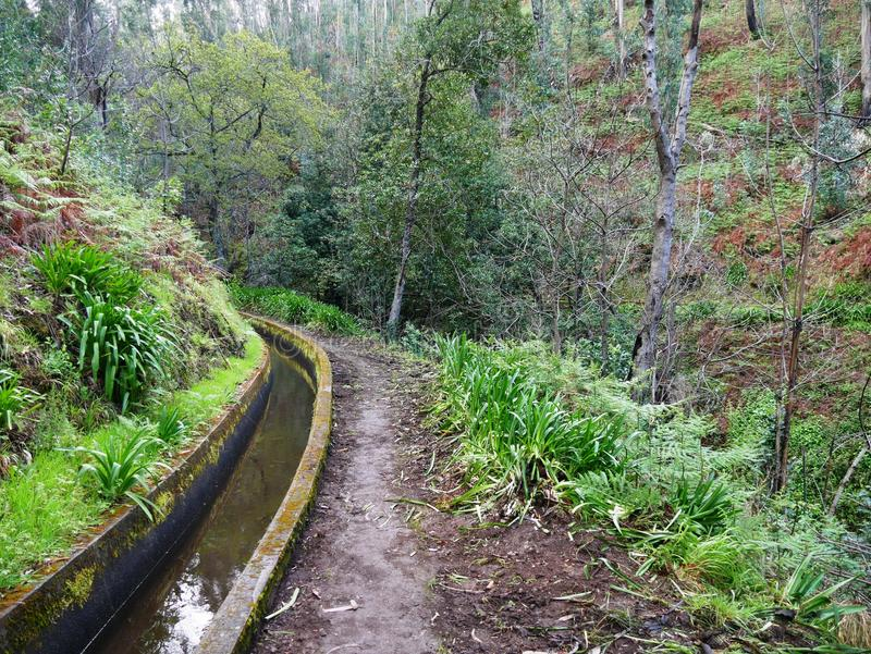 Hiking trail along Levada in Madeira stock image