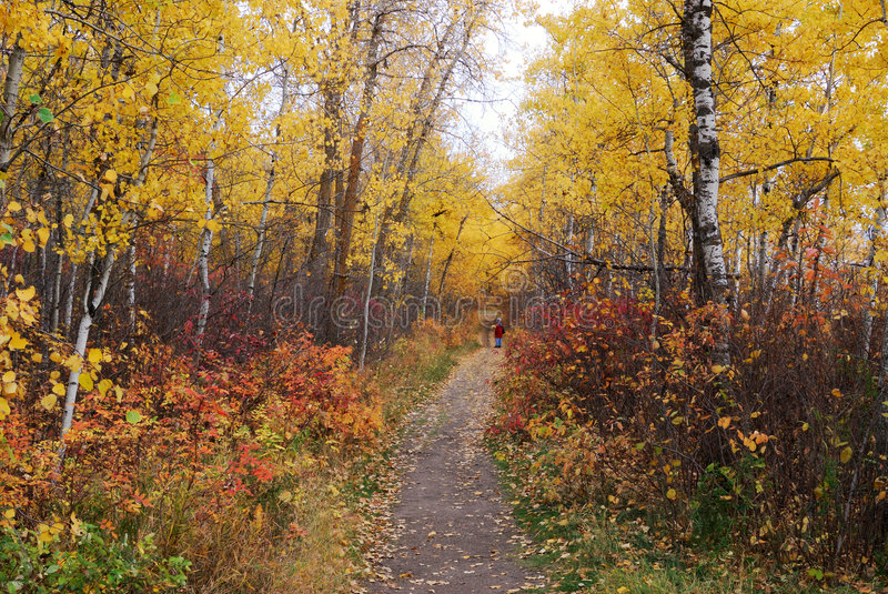 Hiking trail in autumn forest royalty free stock photography