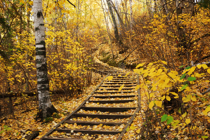 Hiking trail in autumn forest stock photos