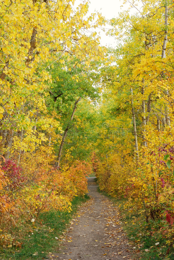 Hiking trail in autumn forest royalty free stock photo