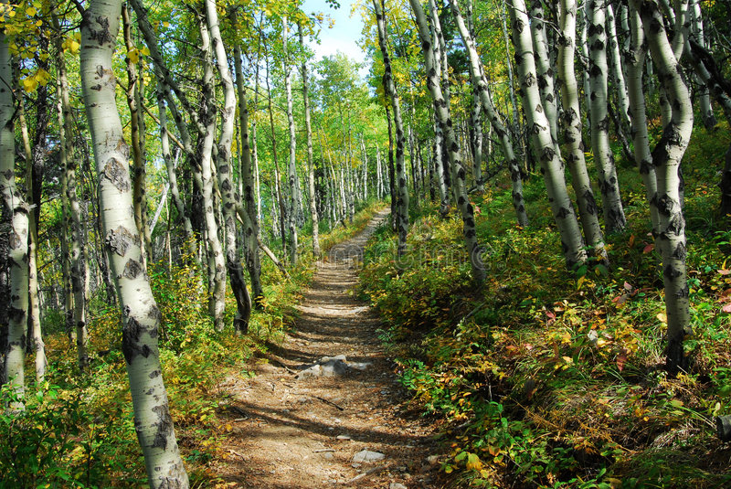 Download Hiking Trail In Autumn Forest Stock Photos - Image: 6952113