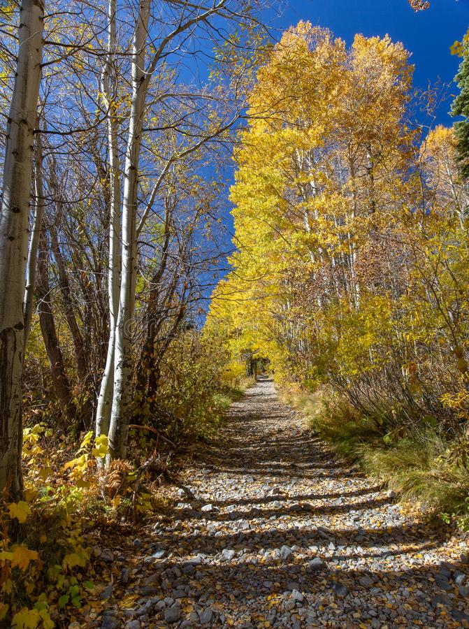 Hiking trail during autumn with one side full and the other empty royalty free stock images