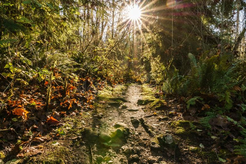 hiking trail in Burnaby Mountain park at sunny autumn day royalty free stock images