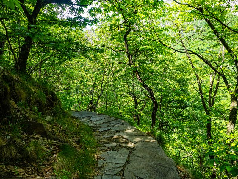 Hiking Trail from Cicogna to Pogallo in Val Grande National Park. Piedmont, Italy stock photo