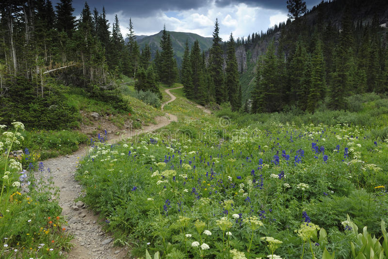 Hiking trail in Colorado Rocky Mountains royalty free stock image