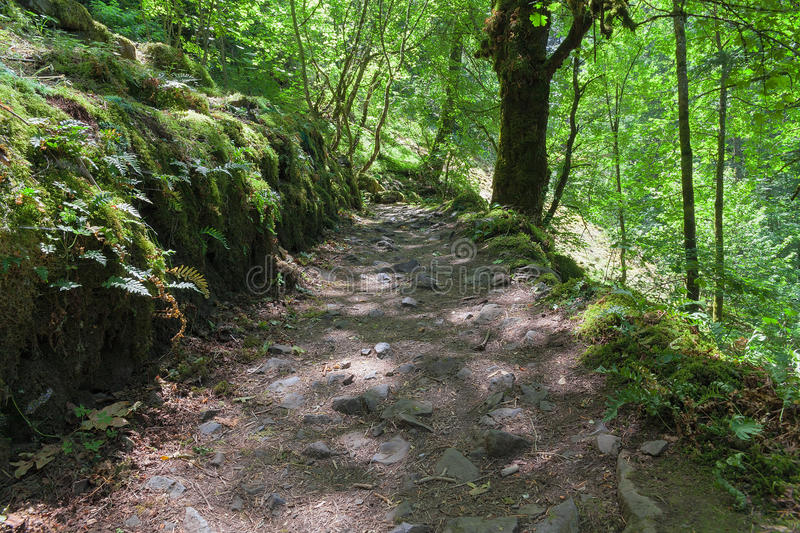 Hiking Trail in Columbia River Gorge in Oregon royalty free stock photos
