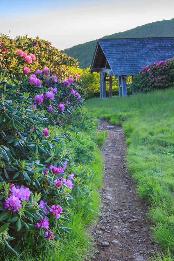 Hiking Trail Craggy Gardens Shelter North Carolina. Hiking trail through the wild catawba rhododendron bushes near the shelter on path to Craggy Gardens royalty free stock images